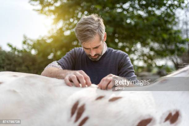 bearded veterinarian gripping at back of spotted horse