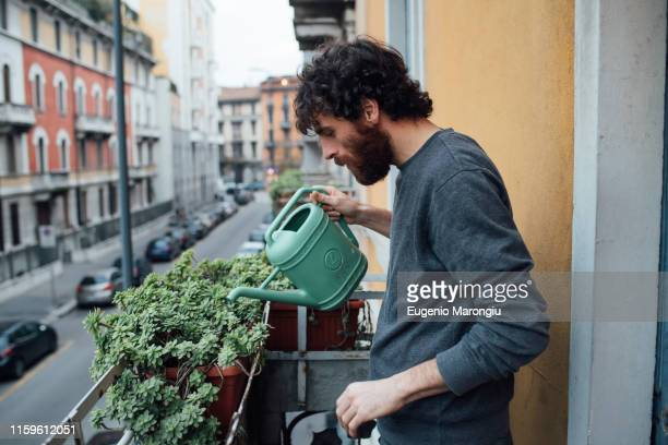 bearded young man watering plants on balcony - watering stock pictures, royalty-free photos & images