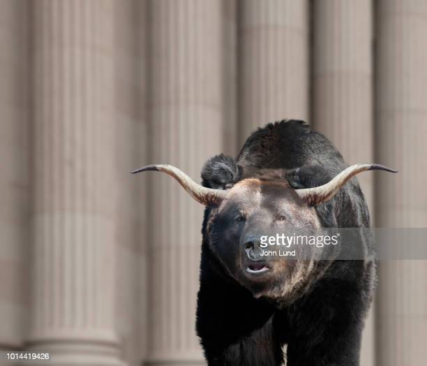 bears, bulls and investment risk - john lund stock pictures, royalty-free photos & images