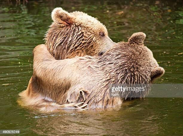 Bears Paar