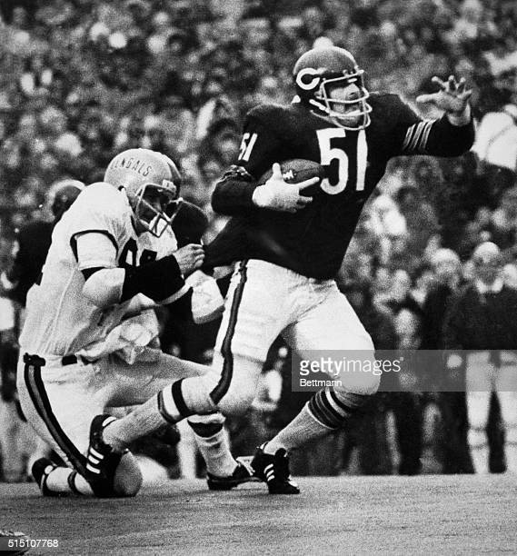 Bears' middle linebacker Dick Butkus a fullback in his high school days tucks away the football and carries for a 6yard gain after intercepting a...