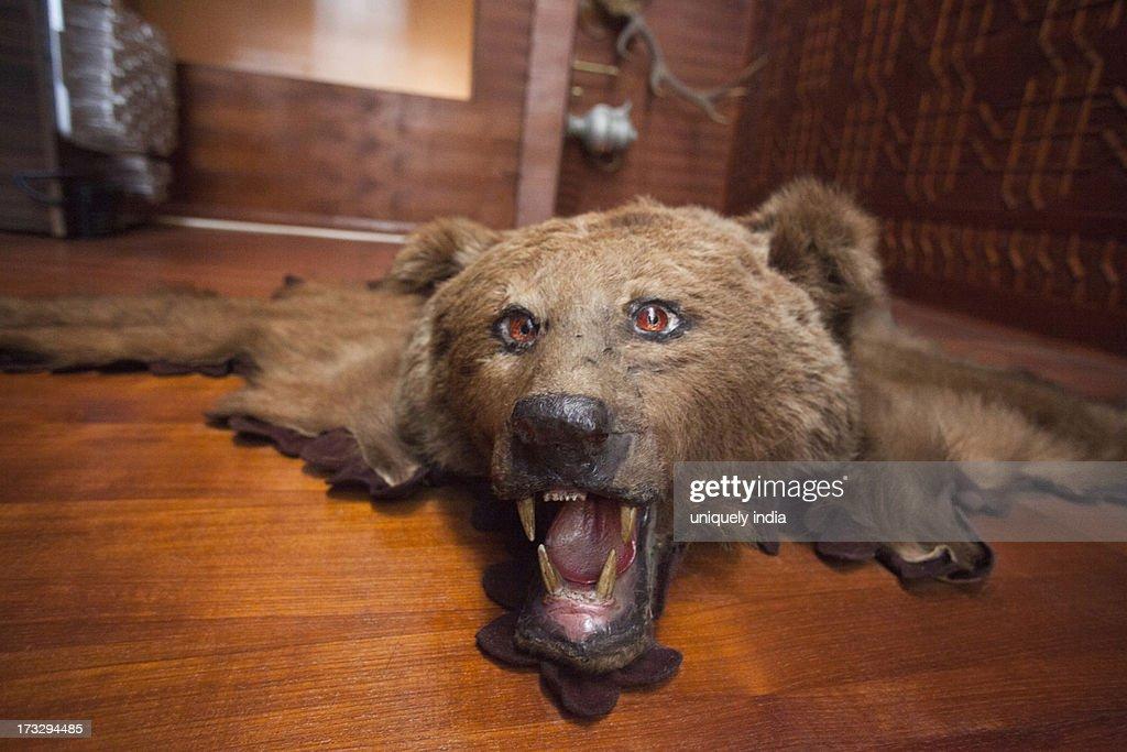 Bearskin Rug, Jammu And Kashmir, India