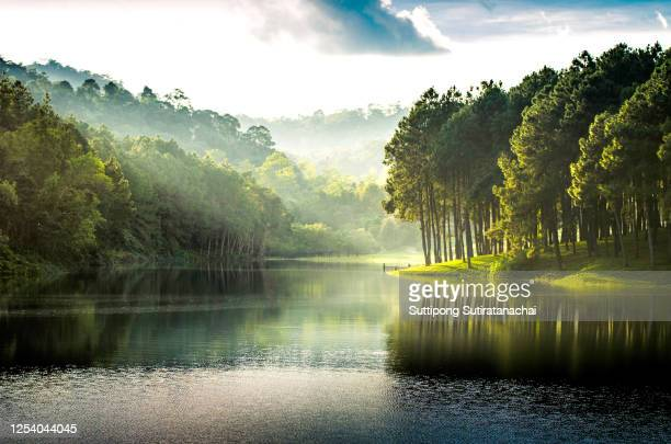 beatiful nature lake and forest , pang oung lake and pine forest in mae hong son , thailand , nature landscape of thailand . pang oung is popular travel destination in thailand - lake stock-fotos und bilder