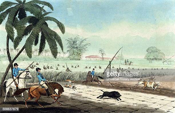 Beating sugarcanes for a hog by Samuel Howitt 17651822 artist 1807 Etching and aquatint handcoloured shows three men on horseback carrying spears...