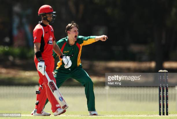 Beau Webster of Tasmania appeals successfully for the wicket of Alex Carey of South Australia during the JLT One Day Cup match between South...