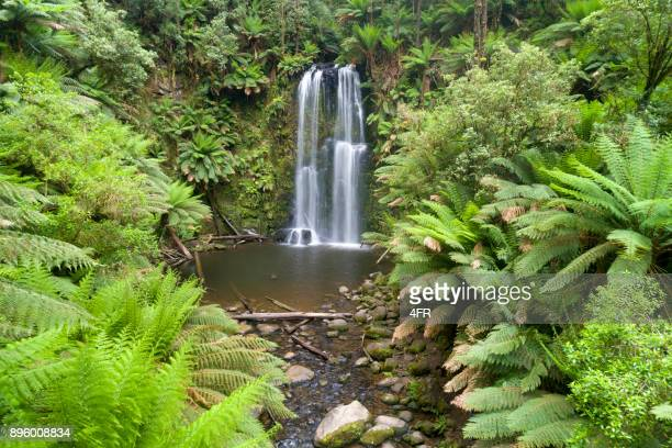 Beauchamp Falls, Great Ocean Road, beukenbos, Victoria, Australië