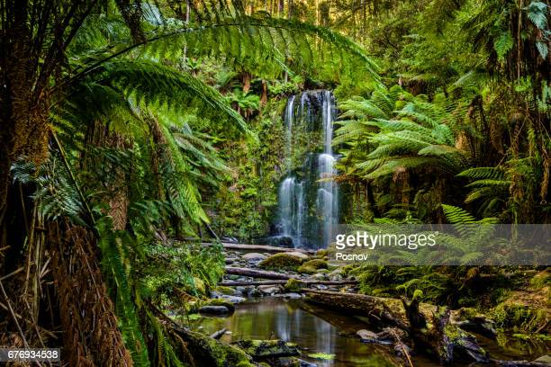 beauchamp falls, great otway national park, victoria - victoria australia stock pictures, royalty-free photos & images