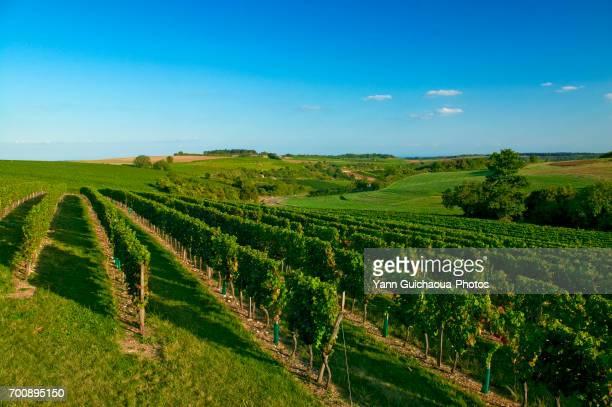 Beaune, Cote d or, Burgundy, France