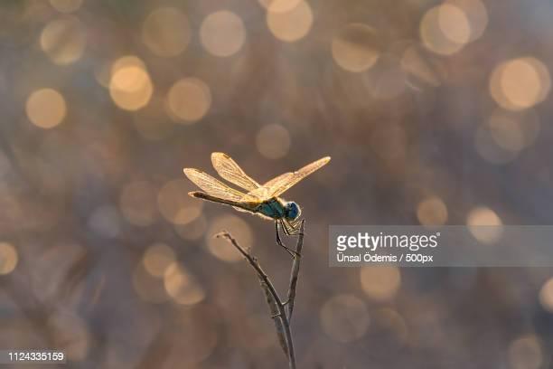 beauties of nature 48 - dragonfly stock-fotos und bilder