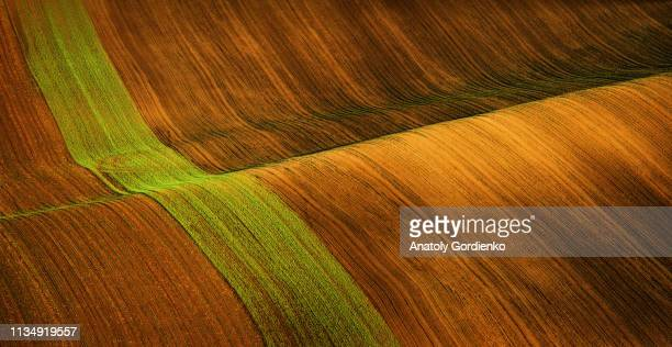 beautiful abstract landscape of the fields of south moravia. spring waves of fields in brown tones in the czech republic. good texture or background - wallpaper roll stock pictures, royalty-free photos & images