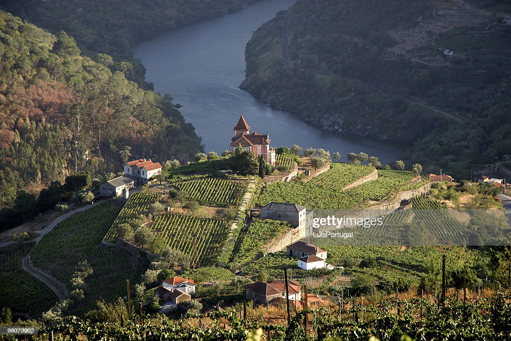 Beautiful aerial landscape shot of Douro Valley : Stock Photo