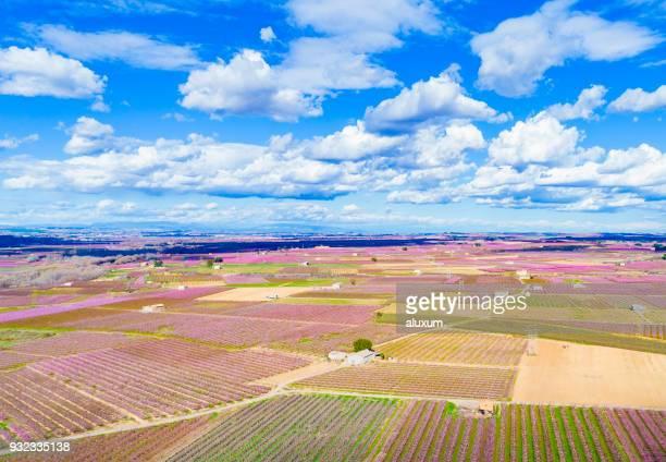 Belle vue aérienne d'arbres fruitiers au printemps fleur Aitona Lleida, Catalogne Espagne