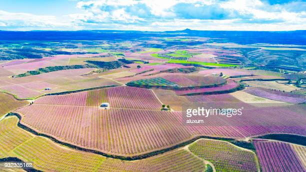 beautiful aerial view of fruit trees in blossom springtime aitona lleida catalonia spain - peach flower stock pictures, royalty-free photos & images