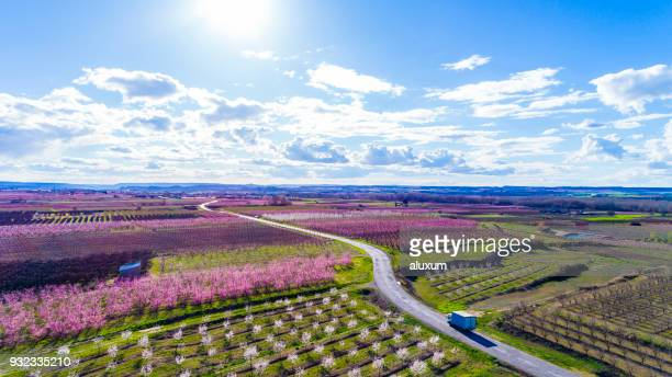 beautiful aerial view of fruit trees in blossom springtime lleida catalonia spain - peach tree stock pictures, royalty-free photos & images