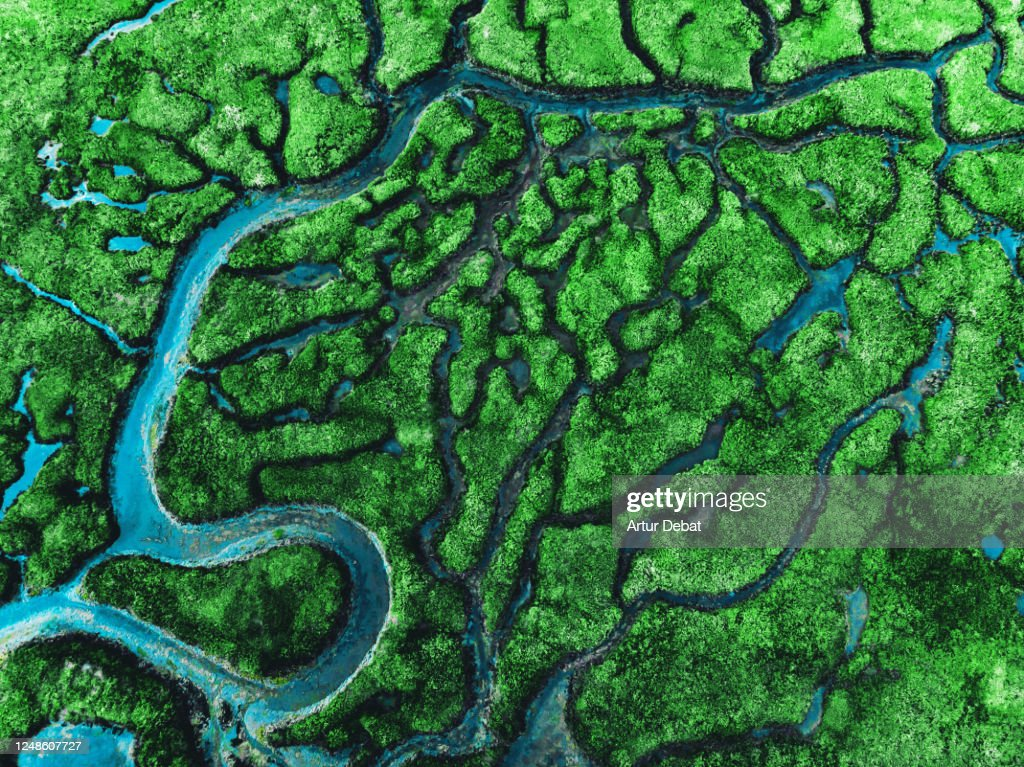Beautiful aerial view of meander river with affluents and green vegetation. : ストックフォト