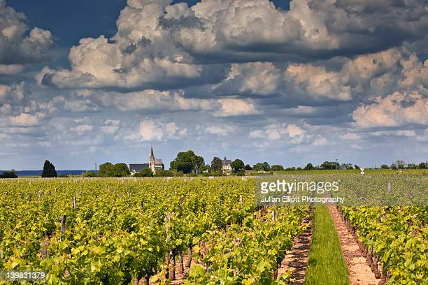 A beautiful afternoon amongst the vineyards of Souzay-Champigny, France. This small village is in the historic Loire Valley near to Saumur.