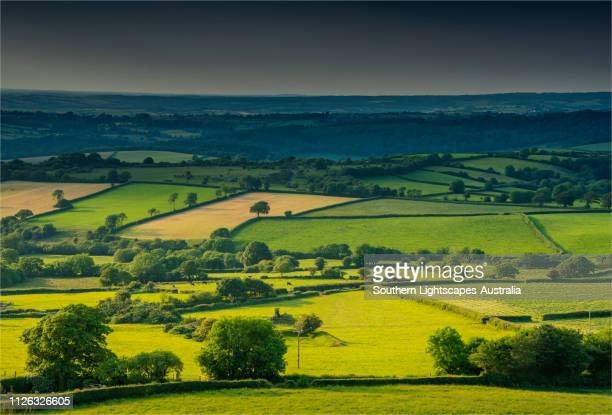 beautiful agricultural farmland bathed in summer light, dartmoor,devon, england. - devon stock pictures, royalty-free photos & images