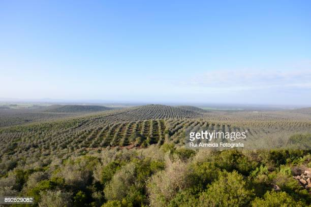 Beautiful Alentejo landscape, Portugal