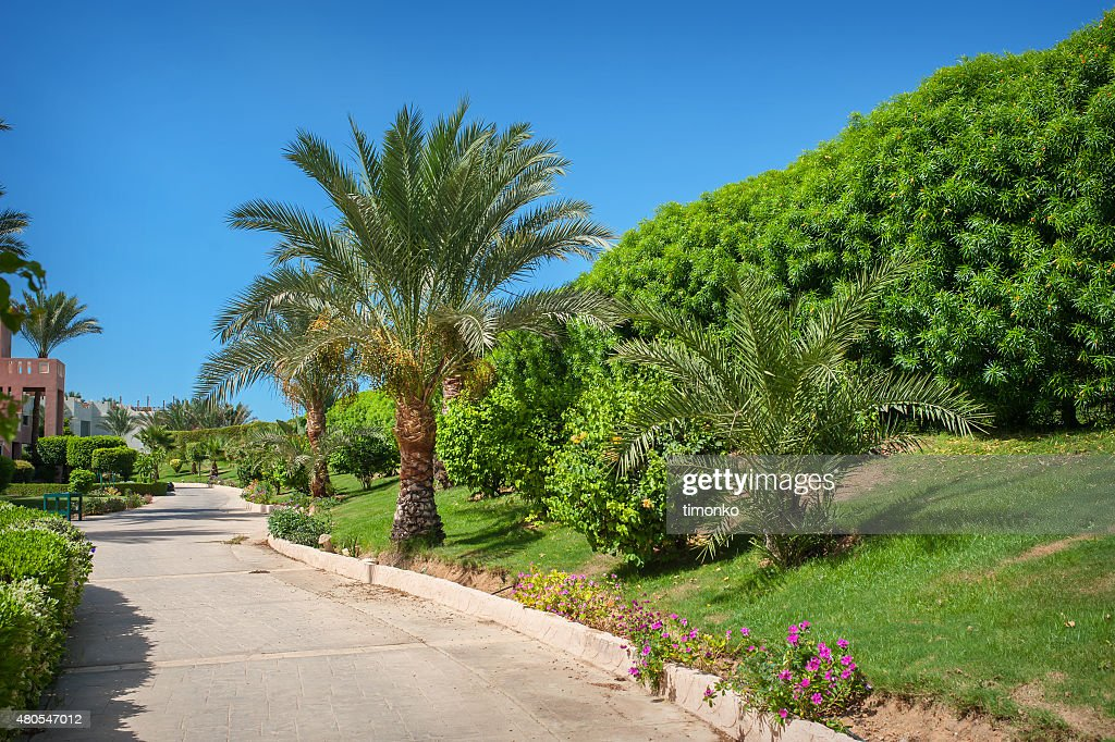 beautiful alley and palm trees in the park in Egypt : Stock Photo