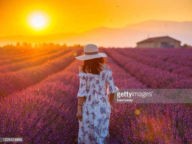 beautiful asian woman in lavender field at sunrise, provence - purple dress stock pictures, royalty-free photos & images