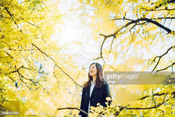 beautiful asian woman surrounded by golden gingko trees and enjoying the spectacular scenics and atmosphere - 雰囲気 ストックフォトと画像
