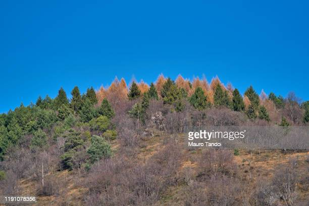 beautiful autumn afternoon in mountains - mauro tandoi foto e immagini stock