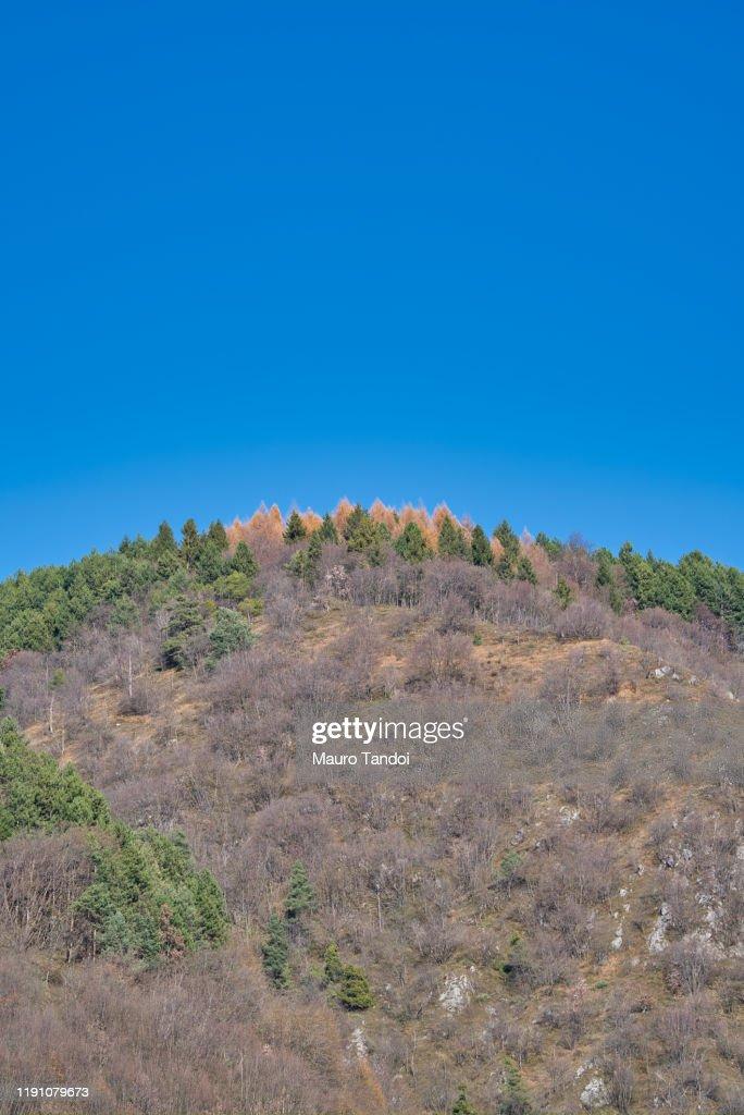 Beautiful autumn afternoon in mountains : Bildbanksbilder
