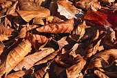 beautiful autumn browngolden leaves similar to