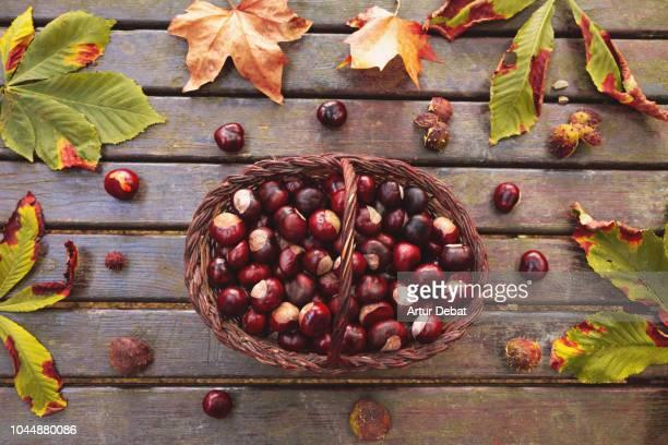 beautiful autumn composition with chestnuts and tree leaves. - kastanie laubbaum stock-fotos und bilder