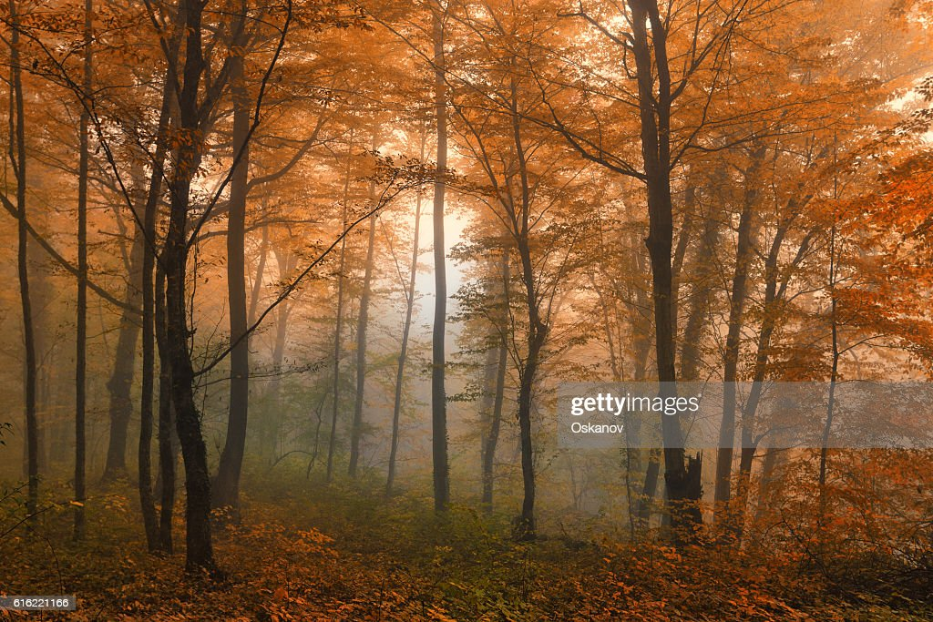 Beautiful autumn forest : Stock Photo