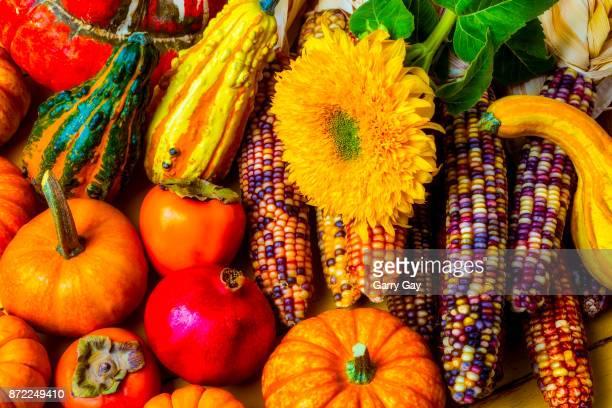 Beautiful Autumn Harvest