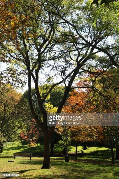 Beautiful Autumn in a Park