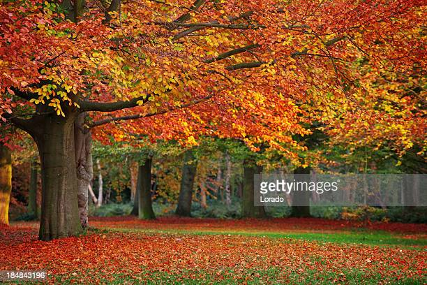 beautiful autumn in park - the hague stock pictures, royalty-free photos & images