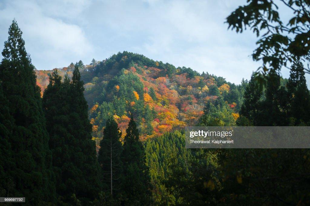 Beautiful autumn landscape, Tohoku, Japan : Stock-Foto
