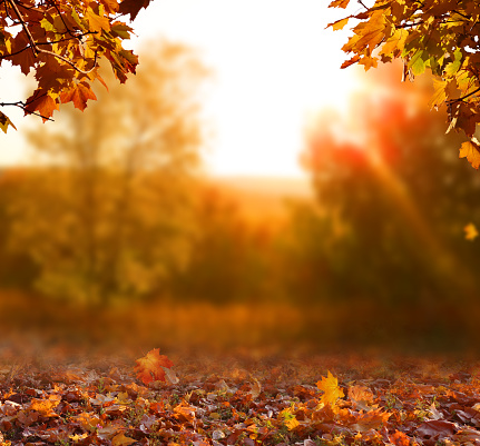 Beautiful autumn landscape with yellow trees,green and sun. Colorful foliage in the park. Falling leaves natural background 1174834416