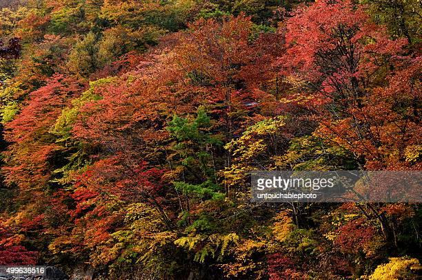 Beautiful autumn nature, Japan