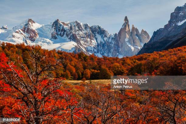 beautiful autumn near cerro torre.  patagonia, argentina - cerro torre photos et images de collection