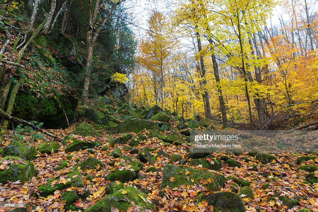 Beautiful Autumn or Fall season colours. Wide angle view of a forest in daytime.