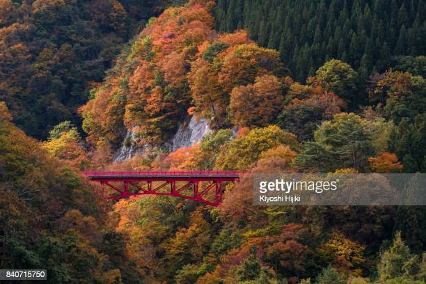 beautiful autumn scene on mountain at takamura village in nagano, japan. - gunma prefecture stock photos and pictures