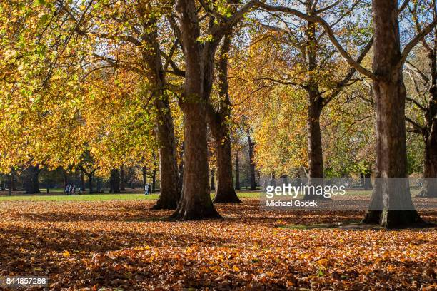 Beautiful Autumn scene with falling leaves in St. James park in London
