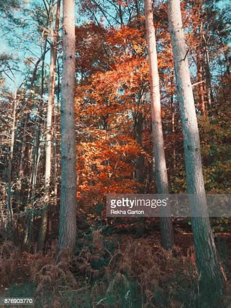 beautiful autumn tree - rekha garton stock pictures, royalty-free photos & images