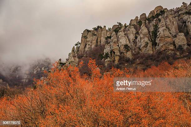 beautiful autumn trees in the background of high mountains. - anton petrus stock pictures, royalty-free photos & images