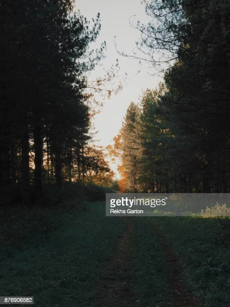 beautiful autumnal forest - rekha garton stock pictures, royalty-free photos & images