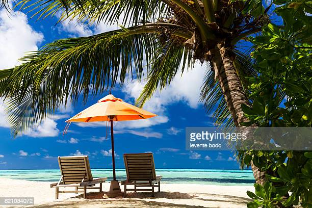 beautiful beach background for summer travel with sun,coconut tree and beach wooden bed on sand with beautiful blue sea and blue sky. summer mood sun beach background concept. - paisajes de republica dominicana fotografías e imágenes de stock