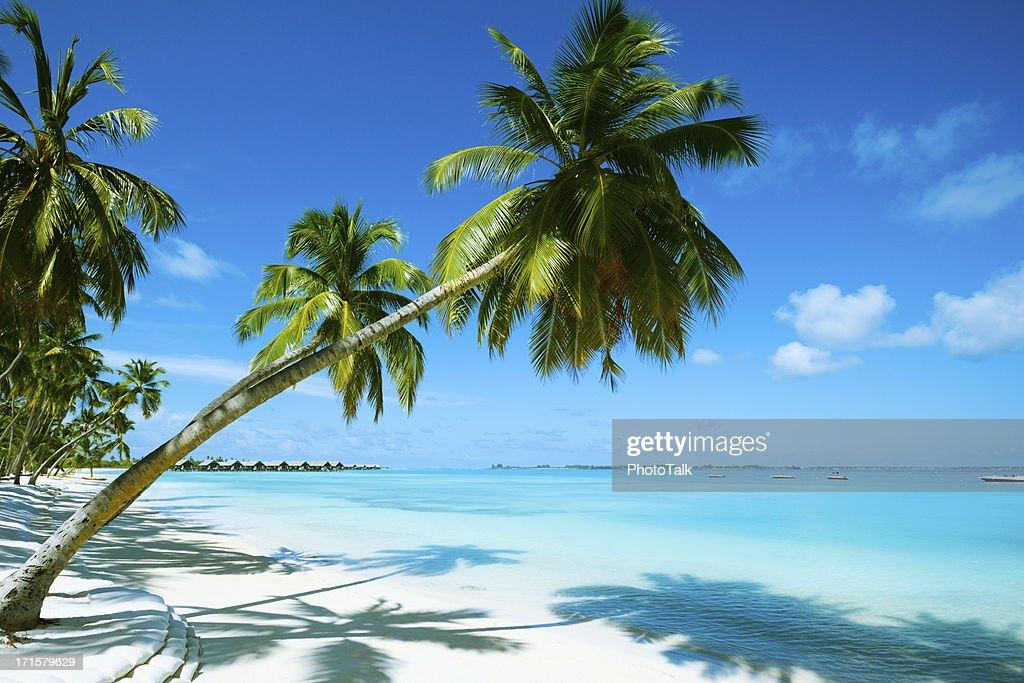Beautiful Beach Resort : Stock Photo