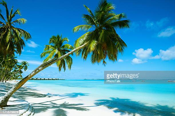 beautiful beach resort - beach stockfoto's en -beelden