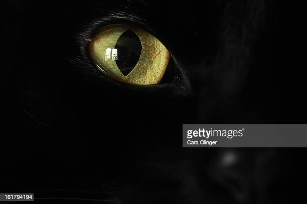 Beautiful black cat eye macro!