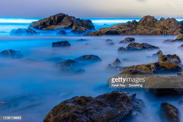 beautiful blue bioluminescence on rocks at scripps coastal reserve - plankton stock pictures, royalty-free photos & images