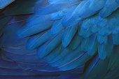 Beautiful blue macaw feathers.