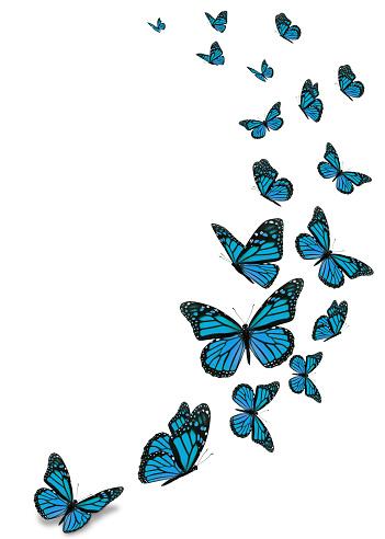 Beautiful blue monarch butterfly 961655600